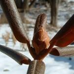 winter_bud