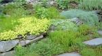rock_gardens_5.jpg