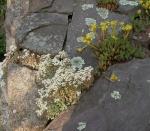 rock_gardens_7.jpg