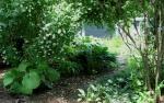 shade_gardens_3.jpg